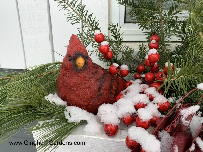 Cardinal in Winter Window Box