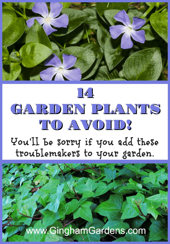 Garden Plants to Avoid