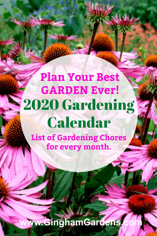 Coneflowers with 2020 Gardening Calendar overlay