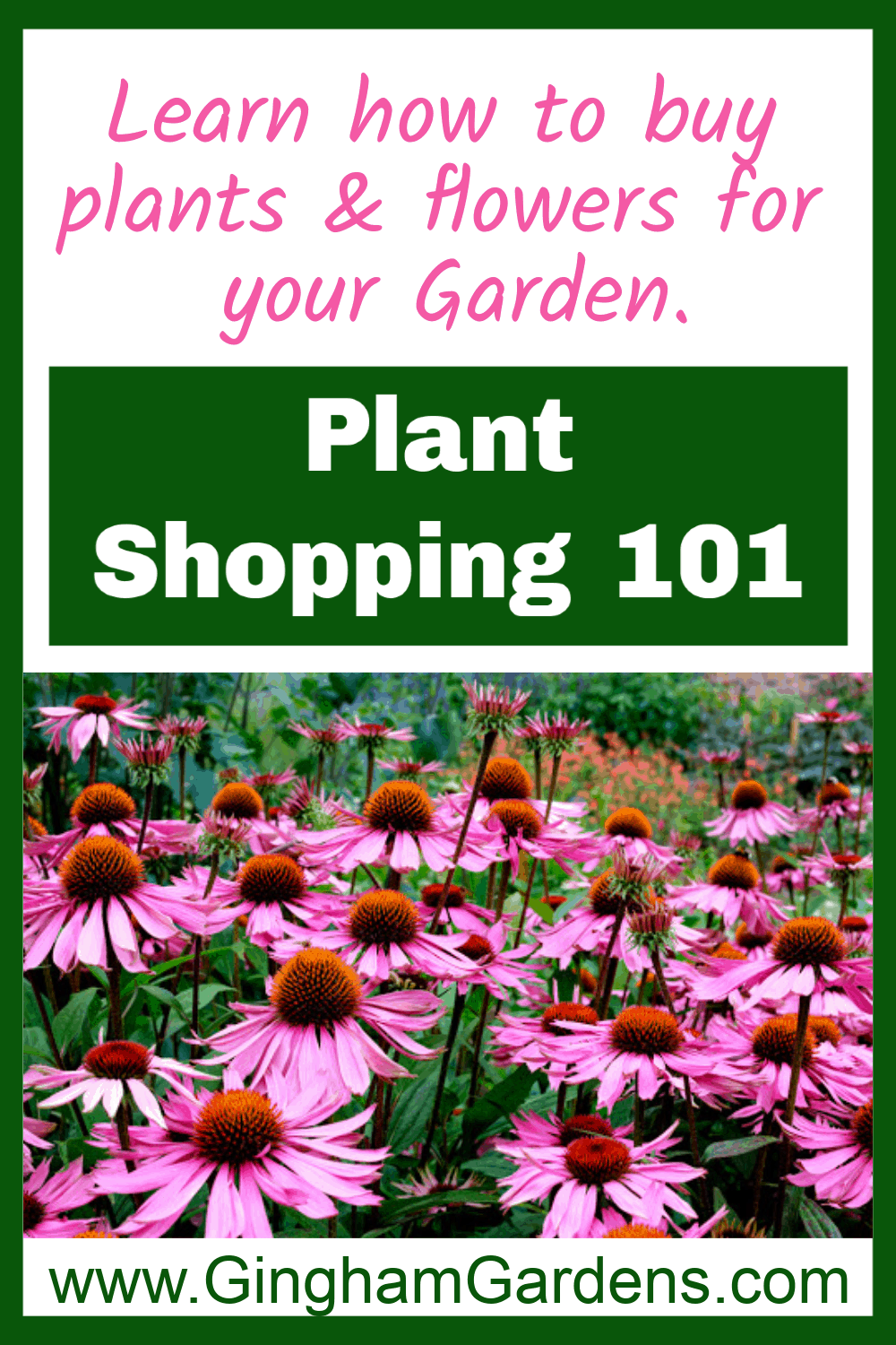 Perennial Coneflowers with Text Overlay - Plant Shopping 101