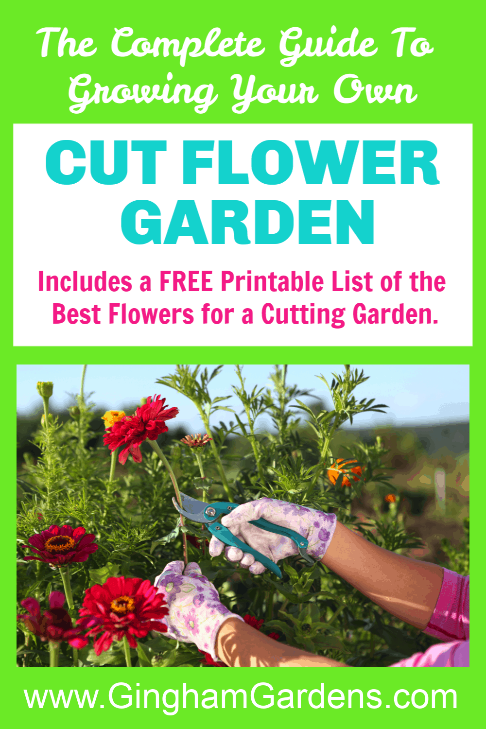 Gardener Cutting Zinnias with Text Overlay - The Complete Guide to Growing Your Own Cut Flower Garden
