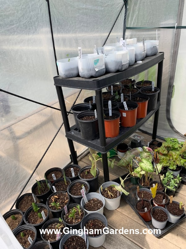 Portable Greenhouse with Plants