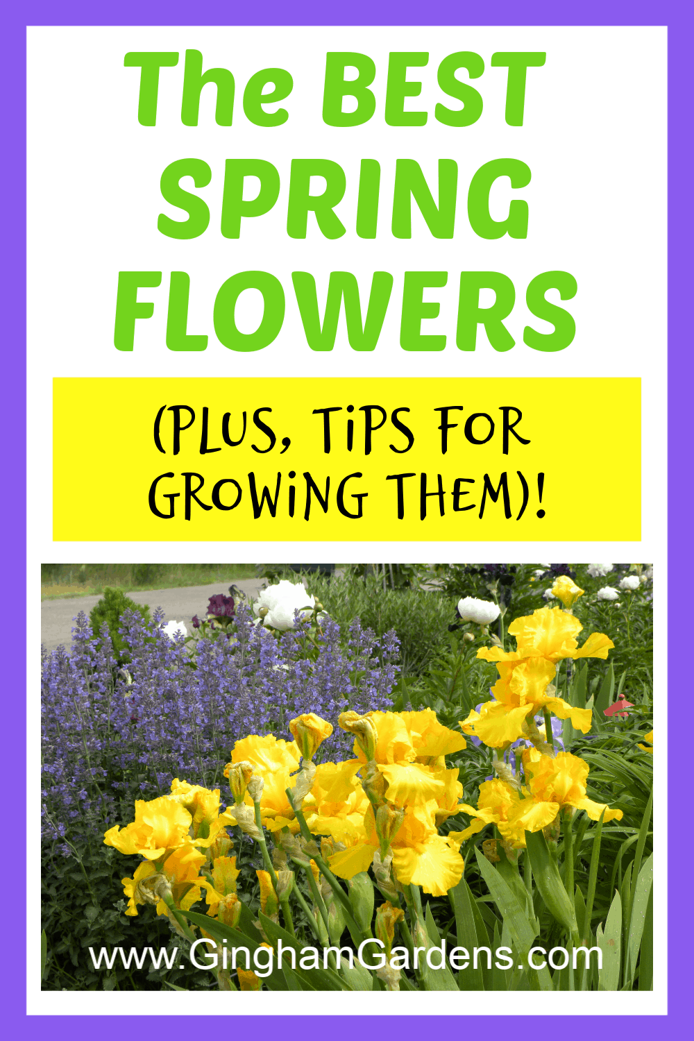 Image of Flowers with text overlay - The Best Spring Flowers and tips for growing them