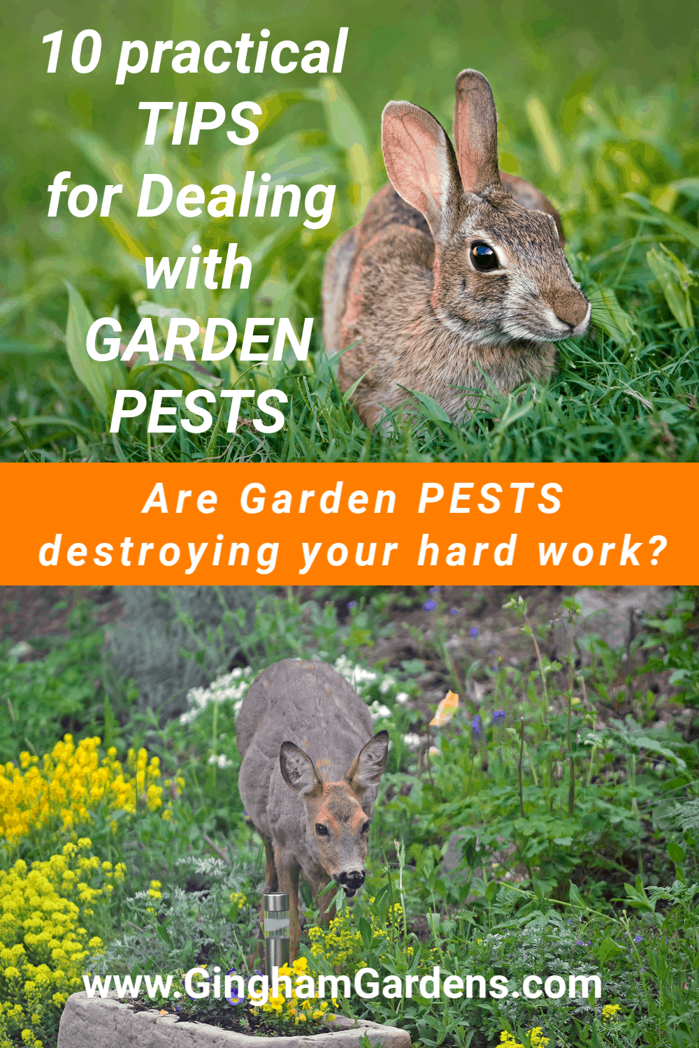 Images of Deer and Rabbit in a Garden with text overlay - 10 Tips for Dealing with Garden Pests