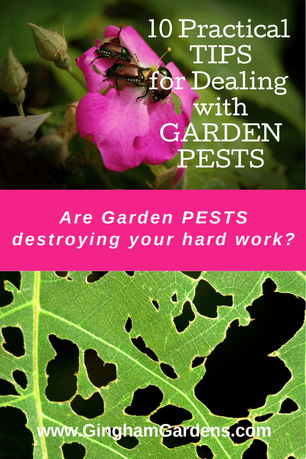 Images of bugs eating garden plants with text overlay - 10 practical tips for dealing with Garden Pests