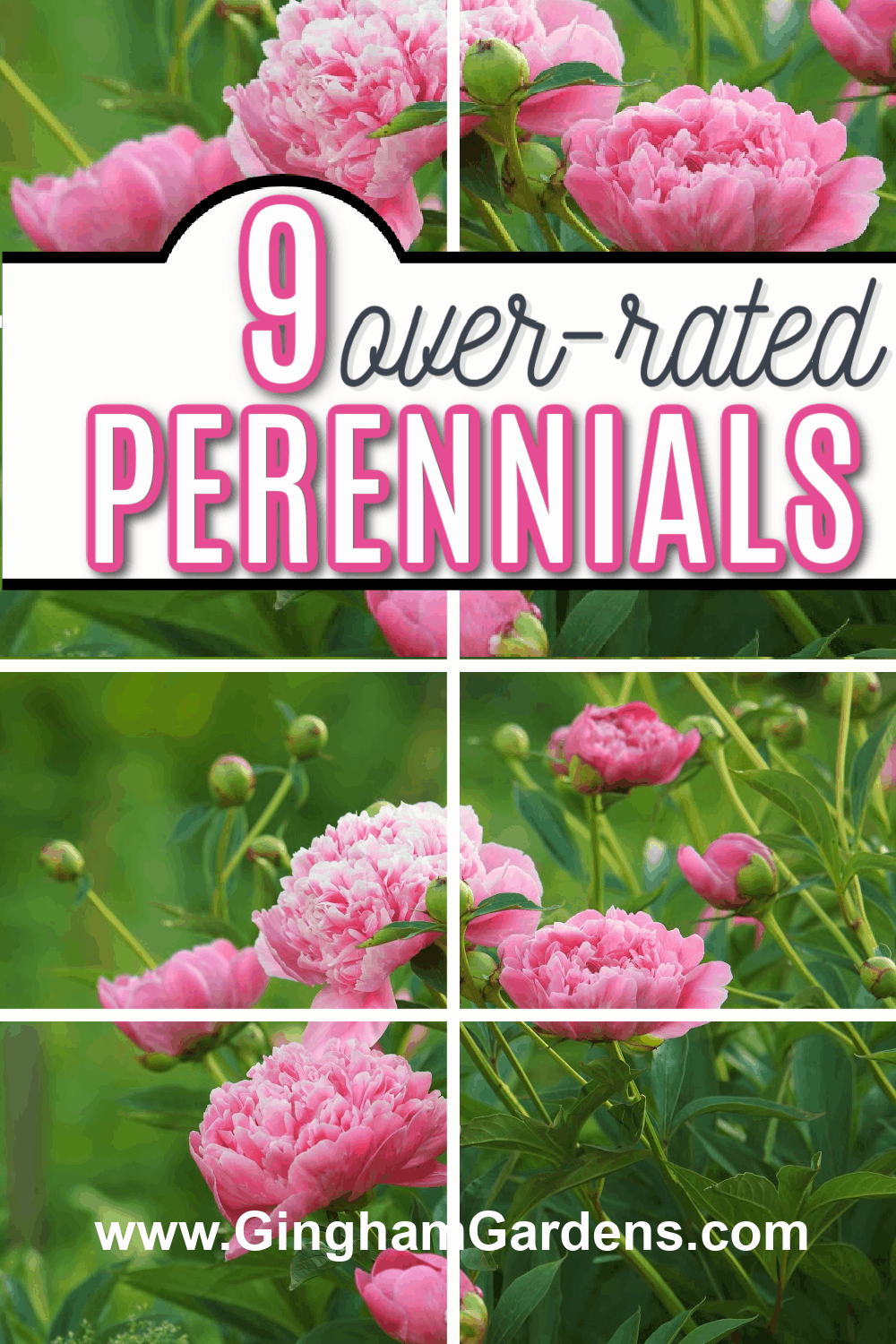 Images of Peony Flowers with text overlay 9 over-rated Perennials