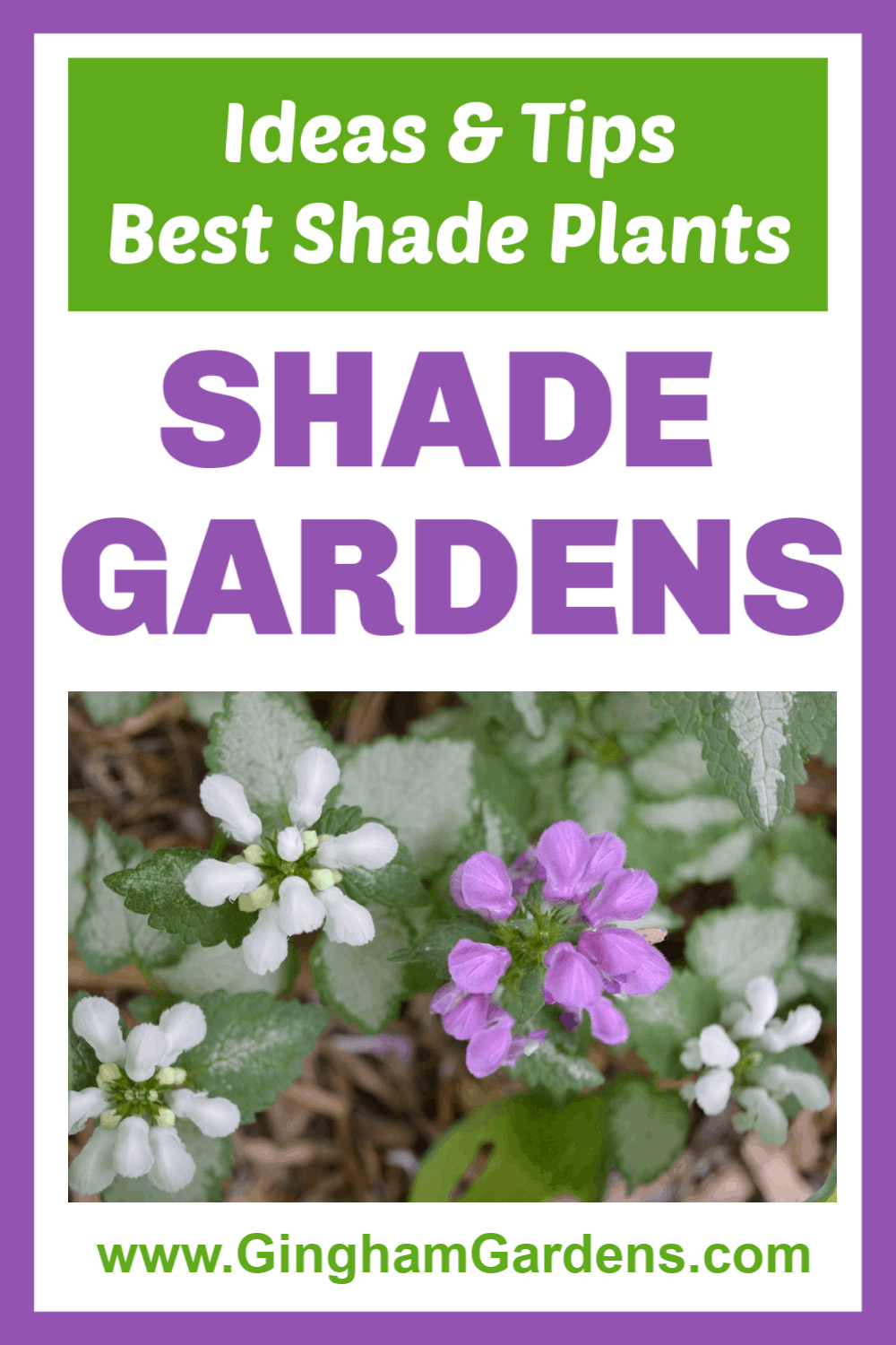 Image of a garden plant with text overlay - Shade Gardens