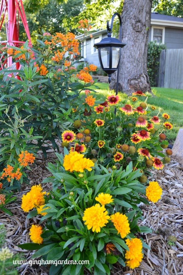 Perennial Flowers - coreopsis, gaillardia and butterfly weed