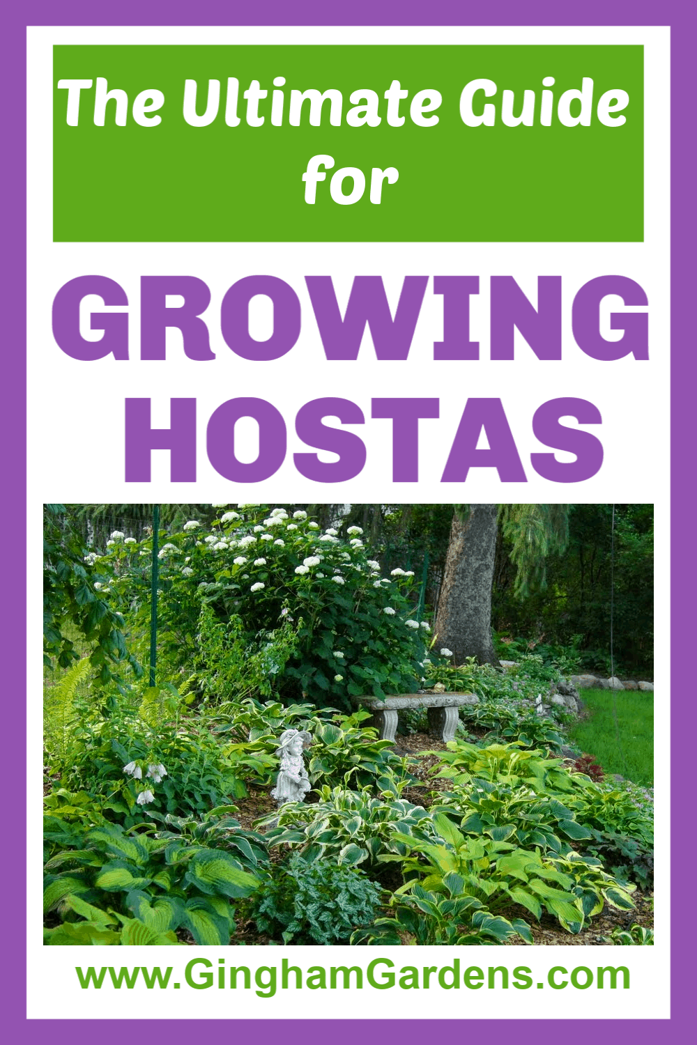 Image of hosta garden with text overlay - The Ultimate Guide for Growing Hostas