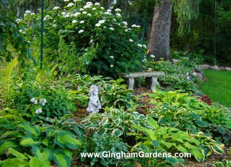 Image of a Hosta Garden