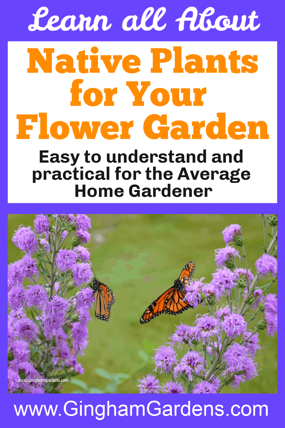 Image of butterfly on flowers with text overlay - Native Plants for Your Flower Garden