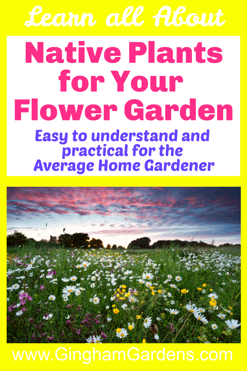 Image of a Wildflower Meadow with text overlay - Native Plants for Your Flower Garden