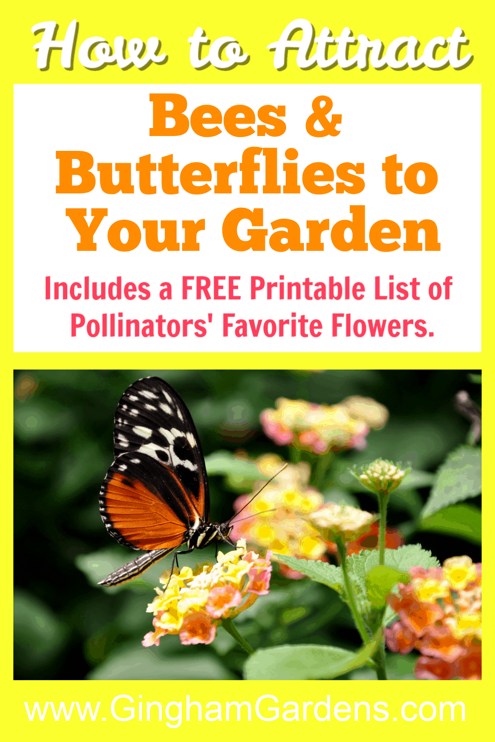 Image of butterfly on flower with text overlay - How to Attract Bees & Butterflies to your Garden