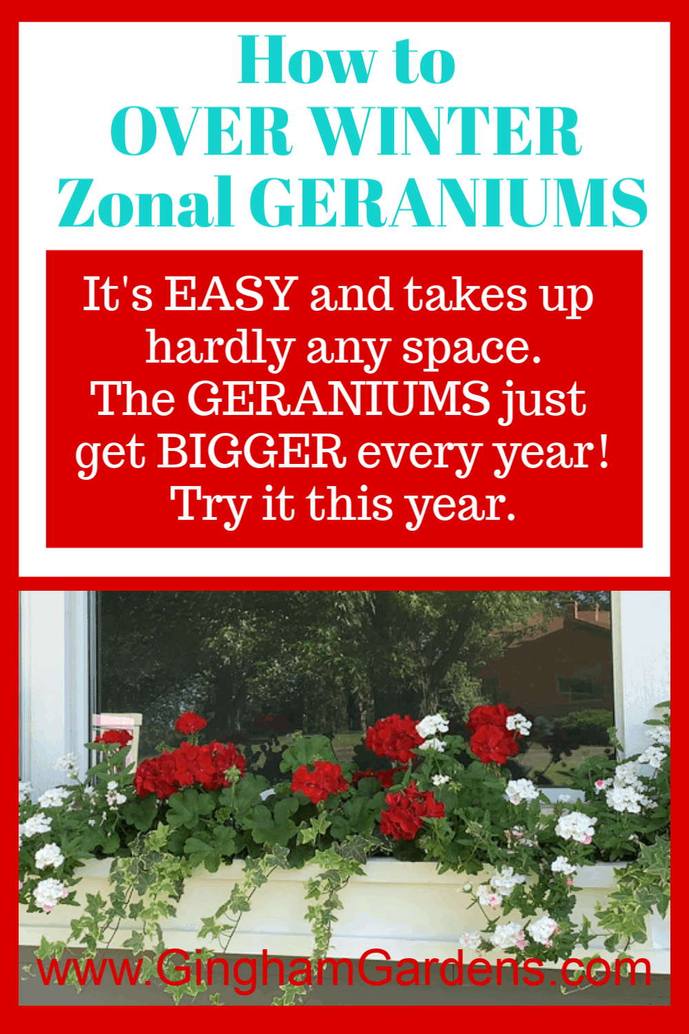 Image of red geraniums in a window box with text overlay - How to Overwinter zonal geraniums