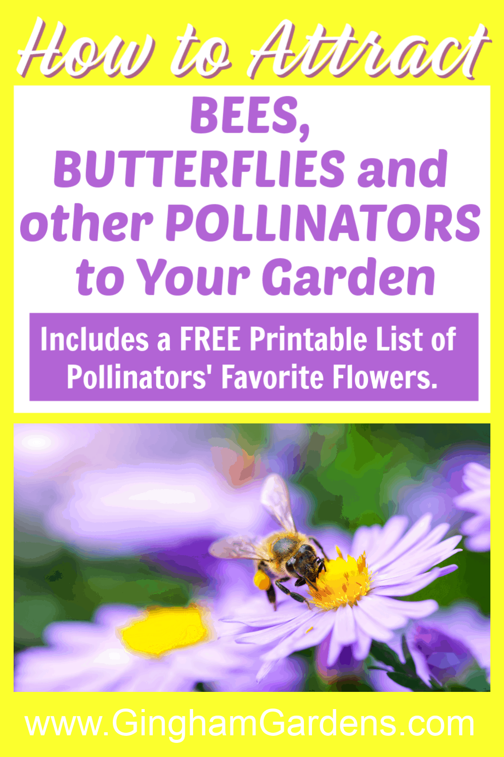 Image of Bee on a Flower with text overlay - how to attract bees, butterflies and other pollinators to your garden