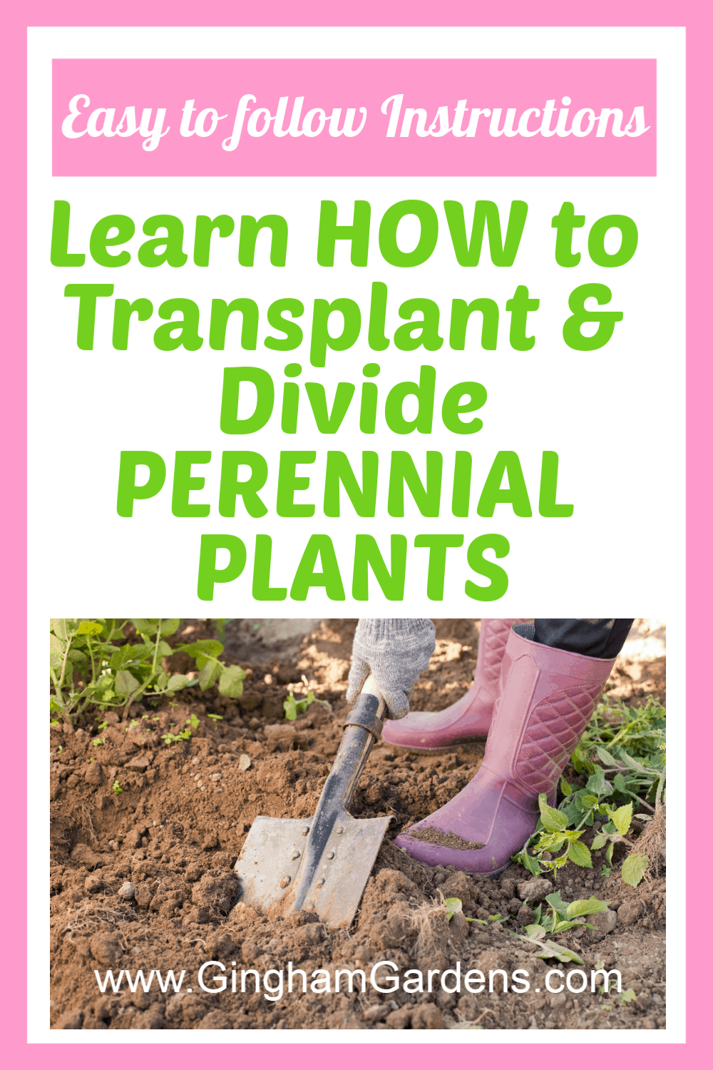Image of a Gardener with text overlay - learn hoe to divide and transplant perennial plants