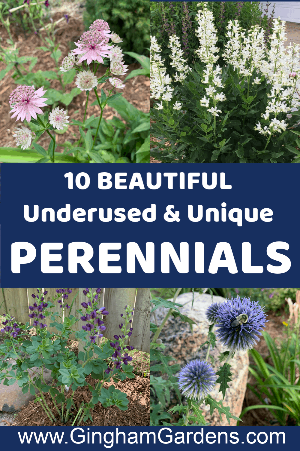 Images of Perennial Flowers with text overlay - 10 Beautiful Underused & Unique Perennials