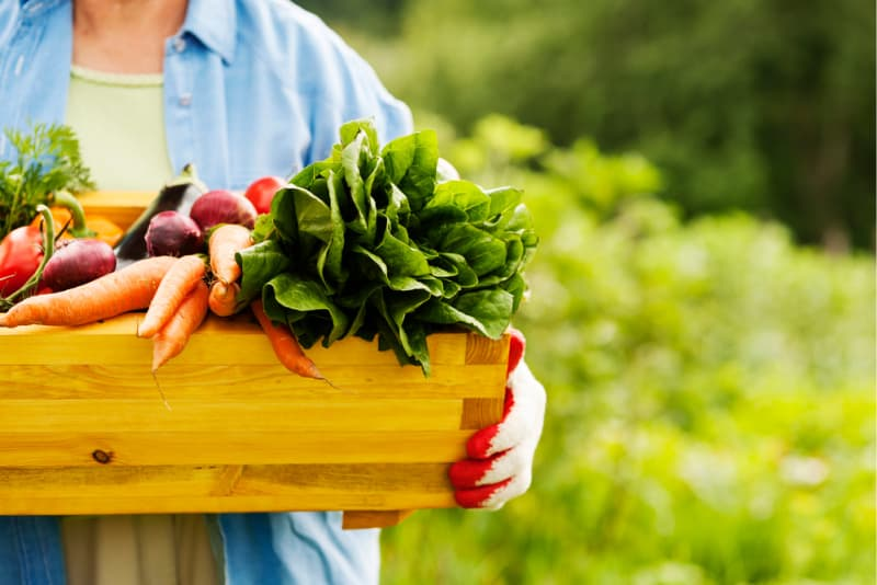 Image of Gardener holding a crate of fresh vegetables