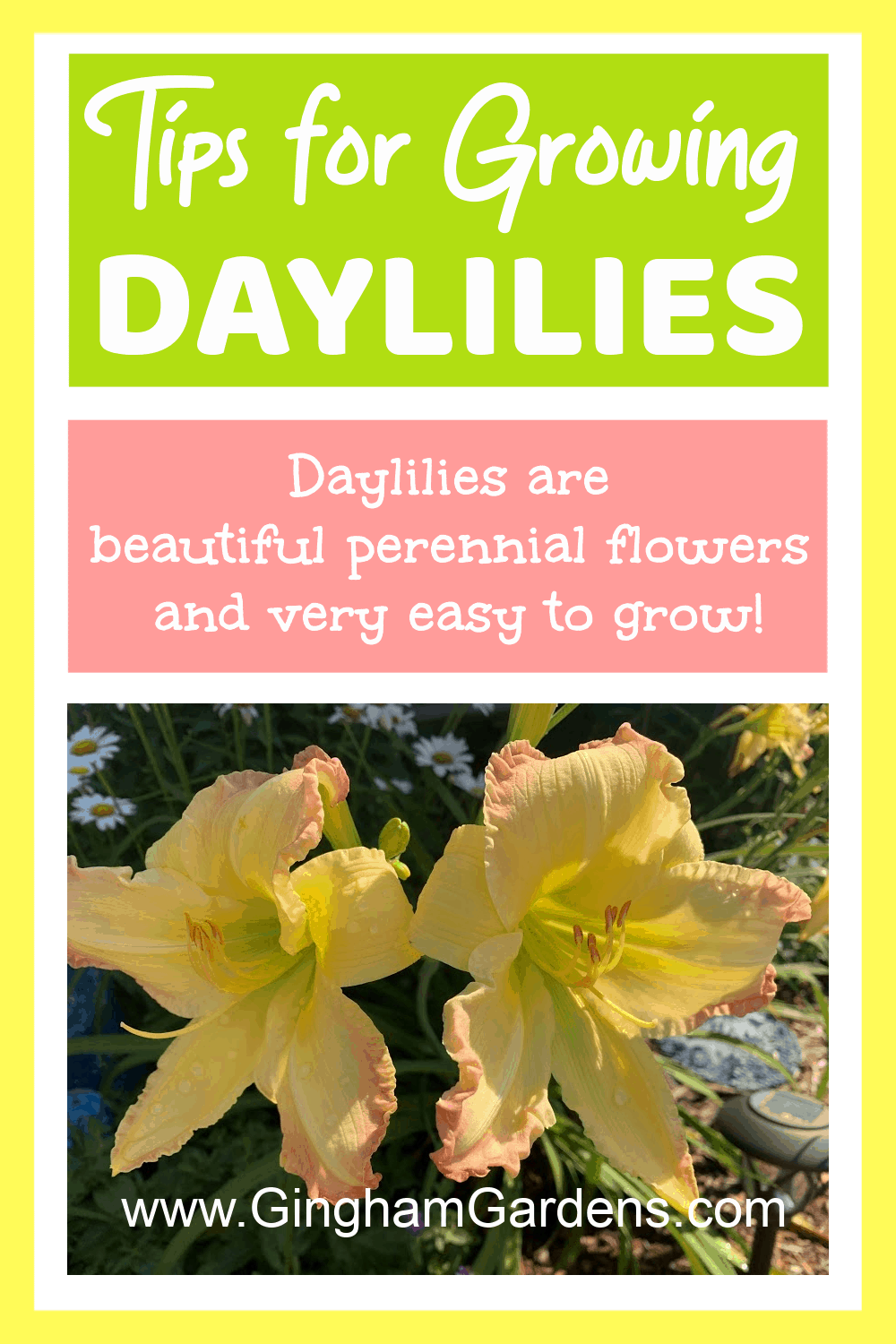 Image of Daylilies - with text overlay Tips for Growing Daylilies