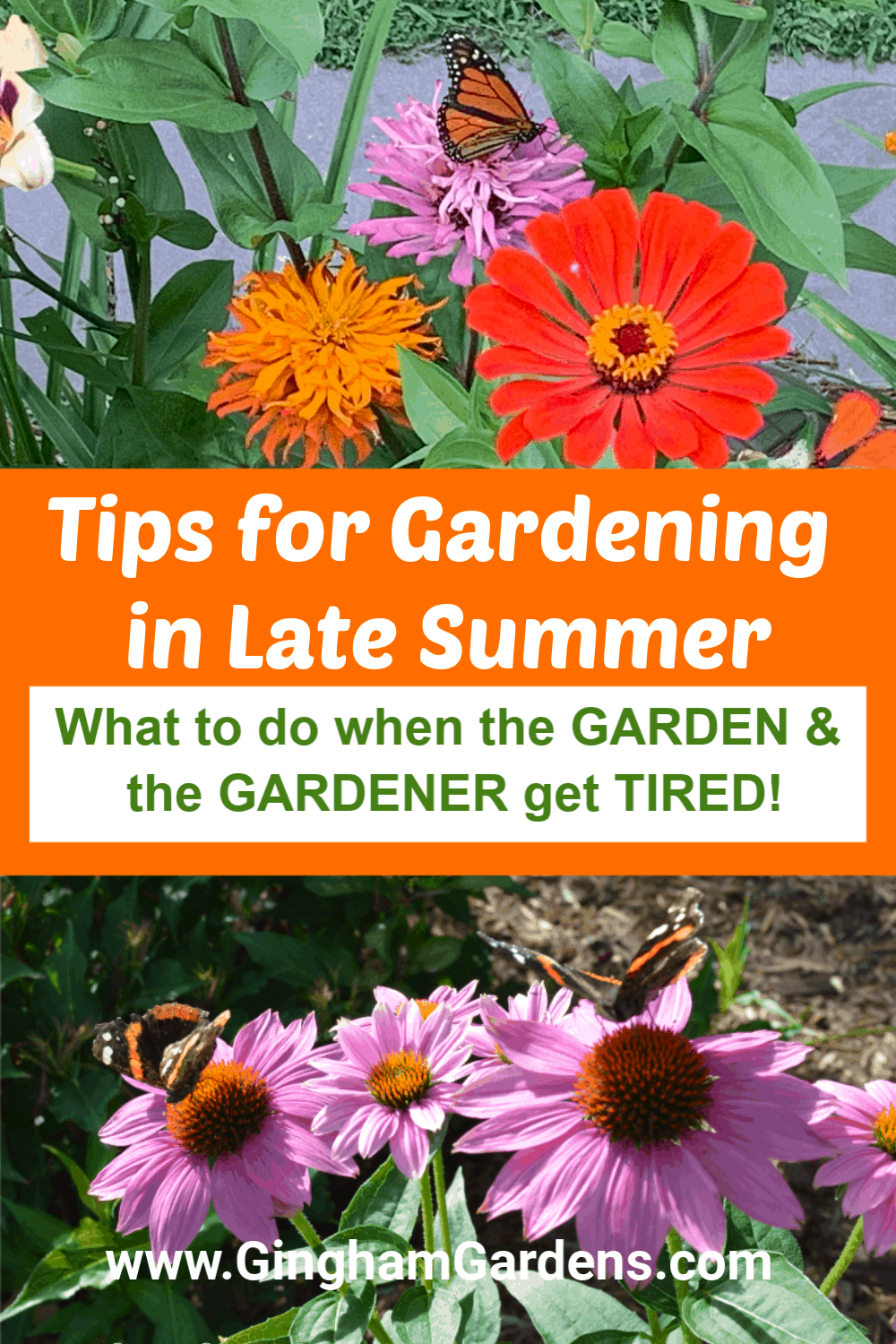 Images of flowers with text overlay - Tips for Gardening in Late Summer