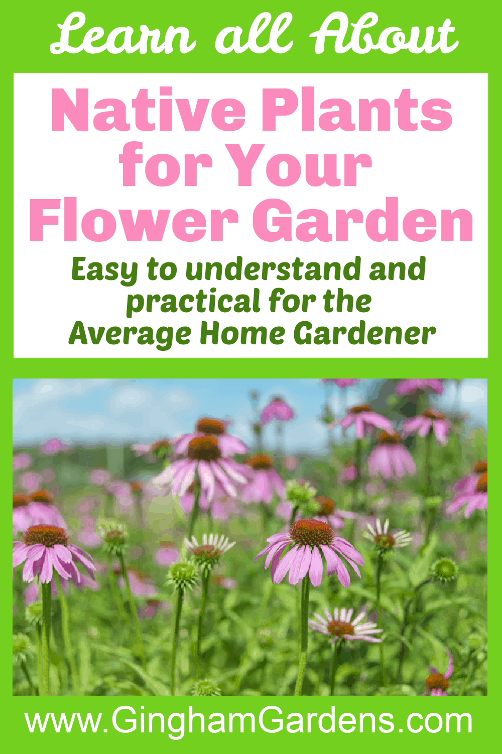 Image of Coneflowers with text overlay - Native Plants for Your Flower Garden