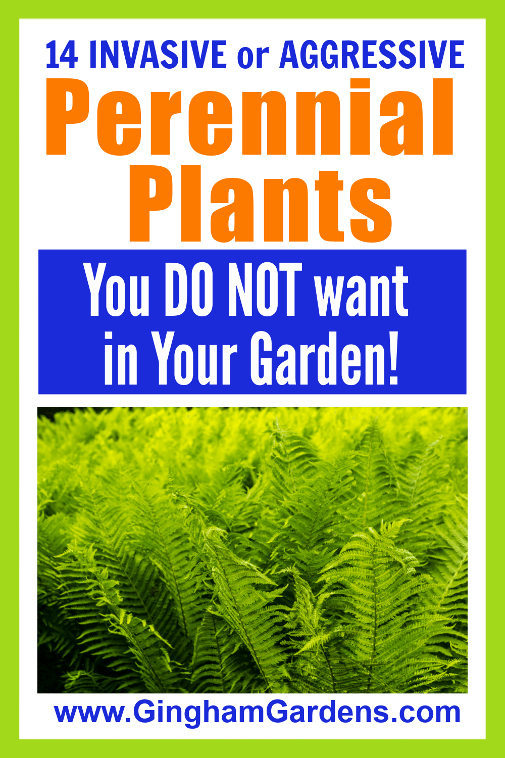 Image of Ostrich Ferns with Text Overlay - 14 Invasive or Aggressive Perennial Plants You Do Not Want In Your Gardens