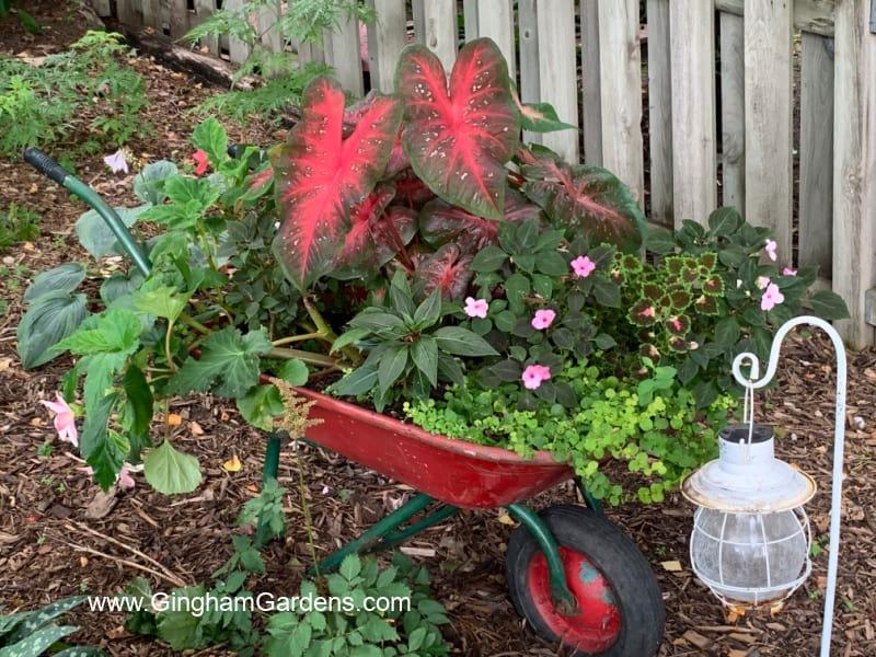 Image of Wheelbarrow planter in a shade garden.