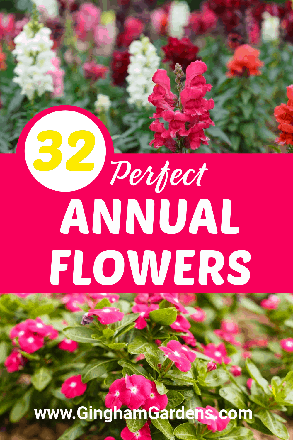 Image of Flowers with Text Overlay - 32 Perfect Annual Flowers