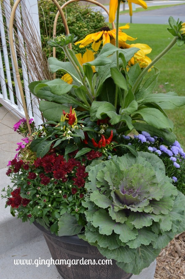 Image of a fall flower container garden.