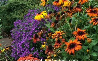 Image of a Fall Flower Garden