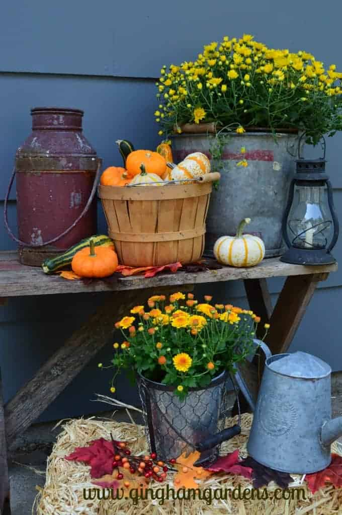 Image of an outdoor fall vignette