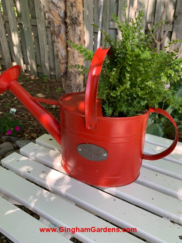 Image of a red watering can with a fern in it.