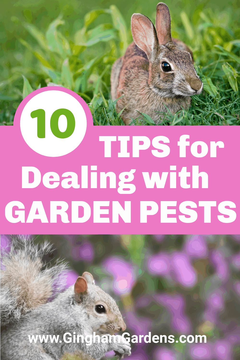 Images of squirrel and rabbit in gardens with text overlay - 10 Tips for Dealing with Garden Pests