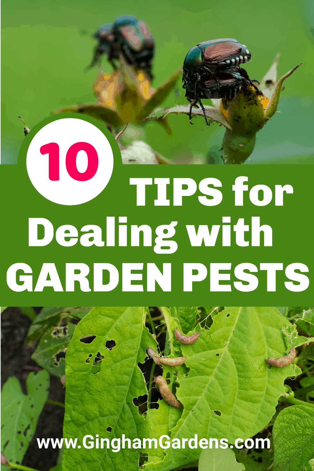 Images of bugs on plants with text overlay - 10 Tips for Dealing with Garden Pests