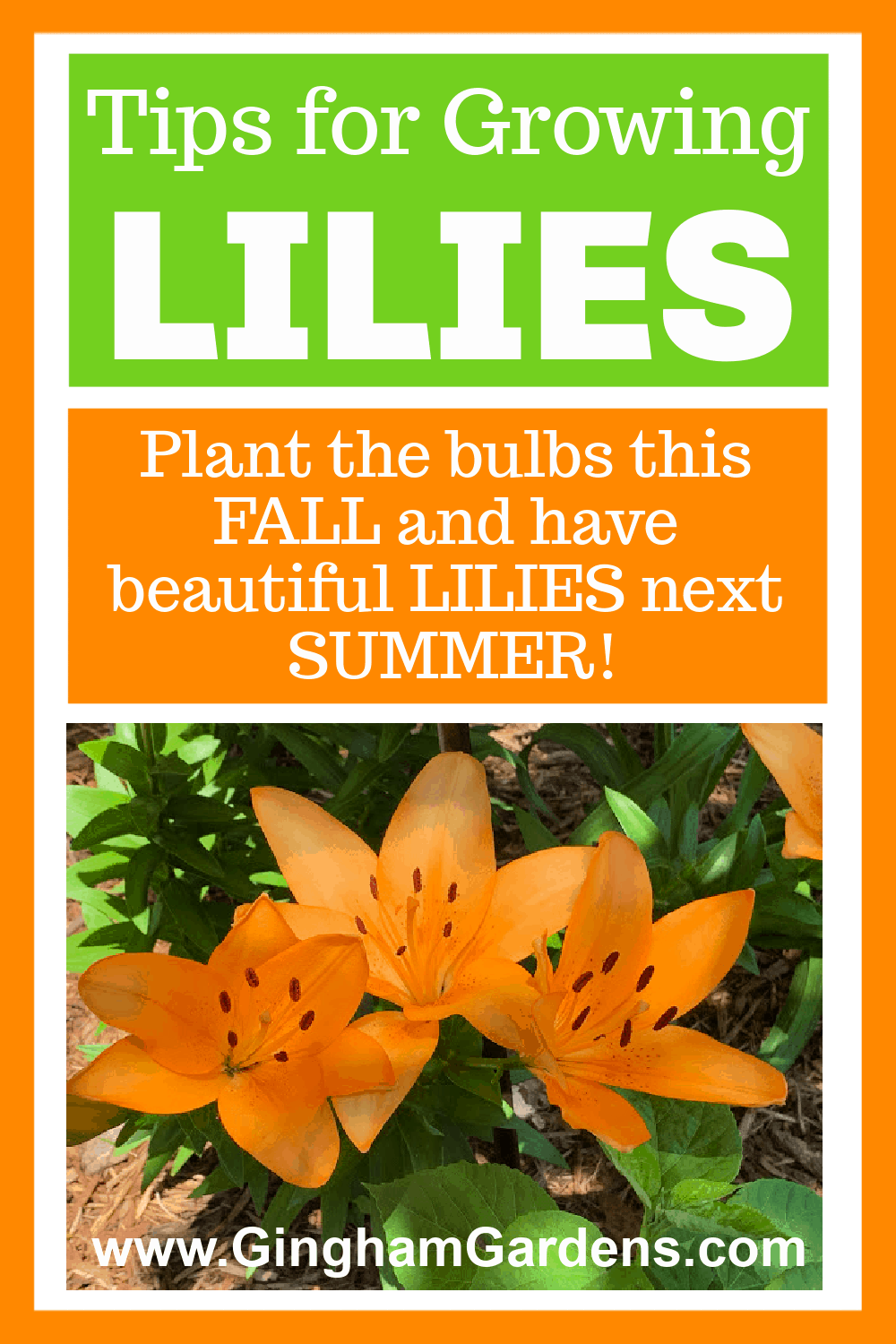Image of Lilies with Text Overlay - Tips for Growing Lilies