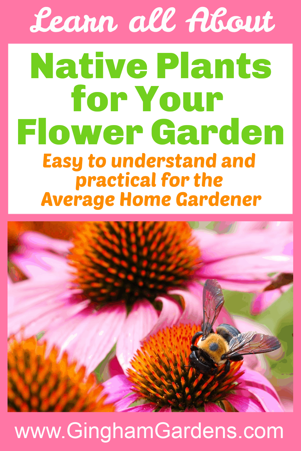 Image of Flowers with a Bee with text overlay - Learn all about Native Plants for Your Flower Garden