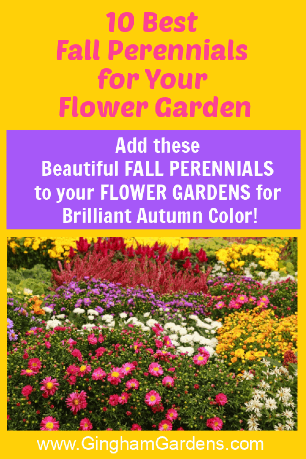 Images of Fall Flowers with text overlay - 10 Best Fall Perennials
