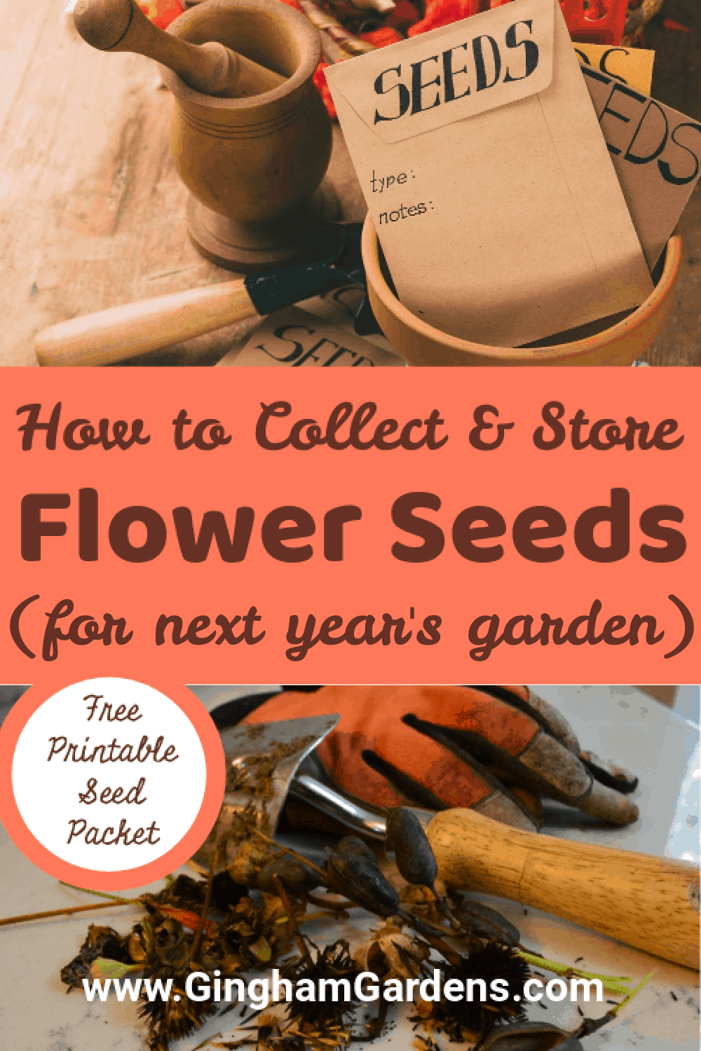 Images of Seeds with Text Overlay - How to Collect and Store Flower Seeds