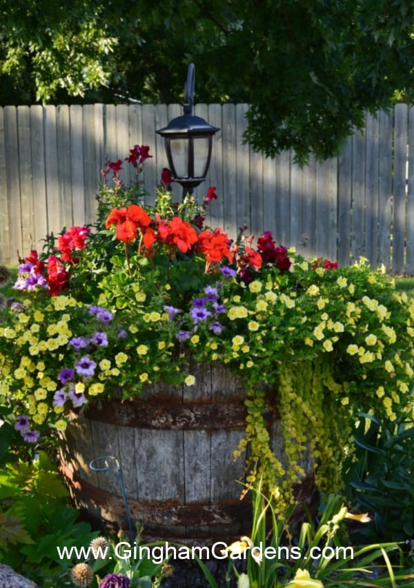 Whiskey barrel planter in summer