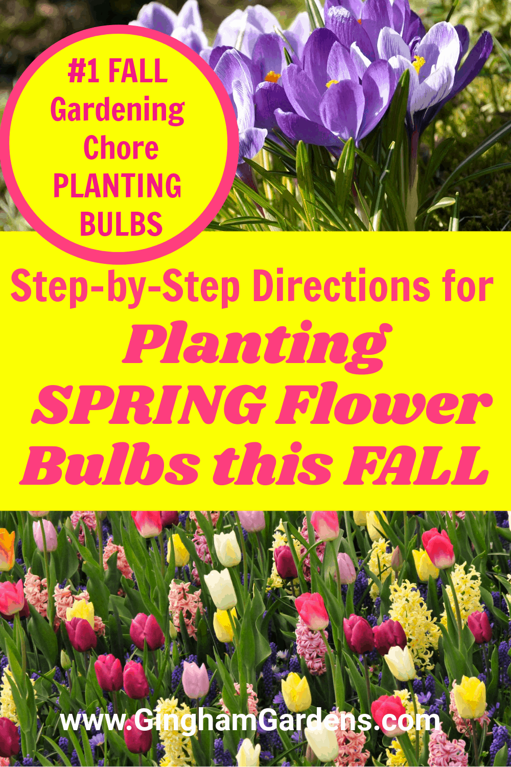 Images of spring flowers with text overlay Step-by-Step Directions for planting spring flowering bulbs this fall.