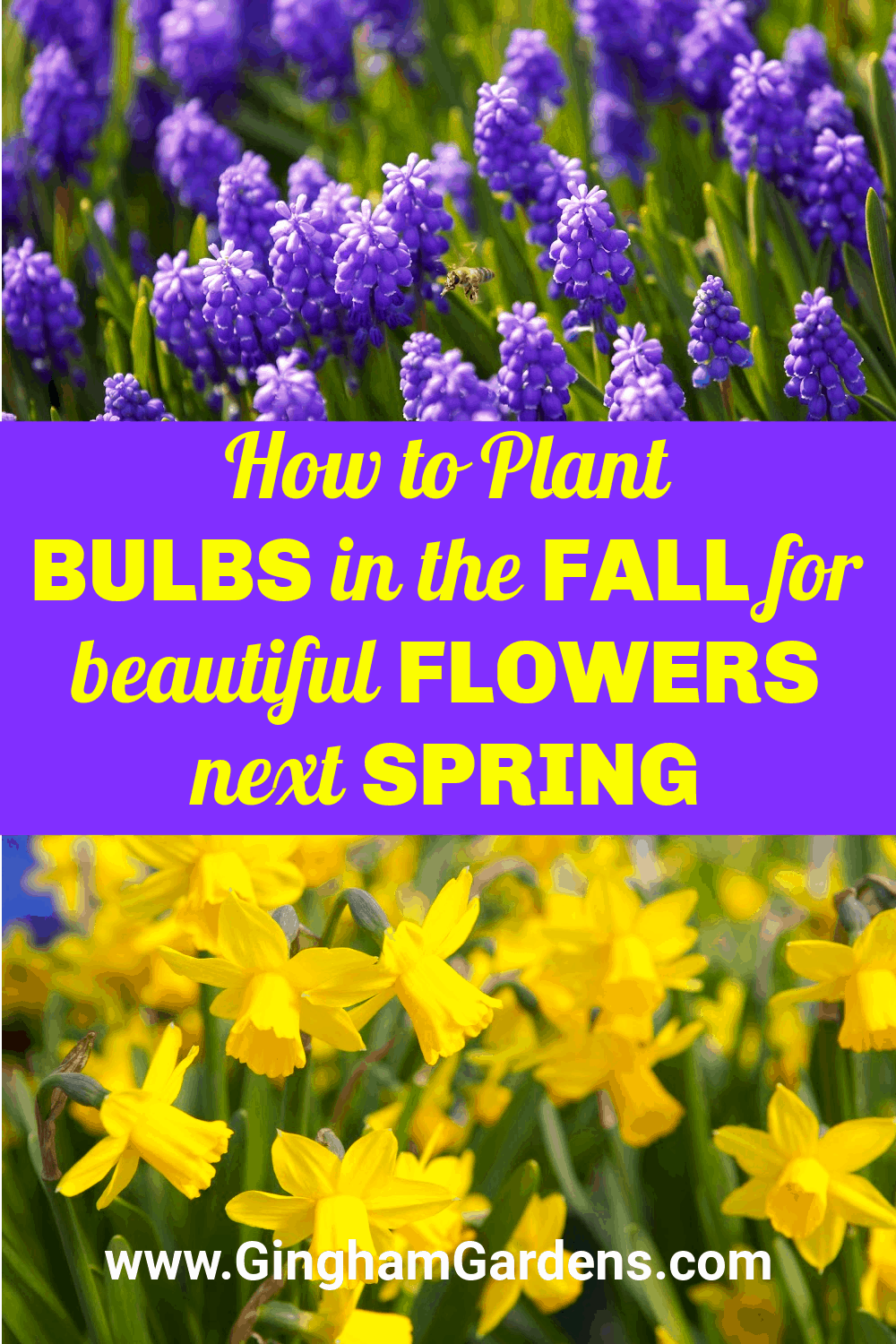 Images of spring flowers with text overlay - How to Plant bulbs in the Fall for beautiful flowers next spring.