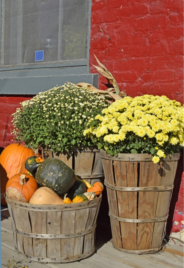 Image of fall flowers and pumpkins