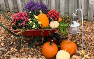 Image of a wheelbarrow with pumpkins and flowers.