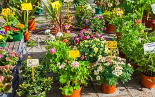 Image of Plants & Flowers for Sale
