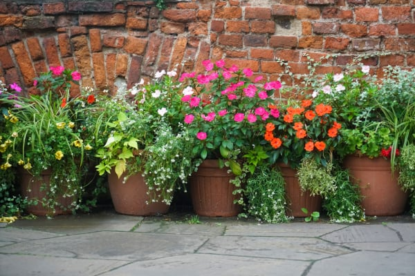 Image of flowers in pots