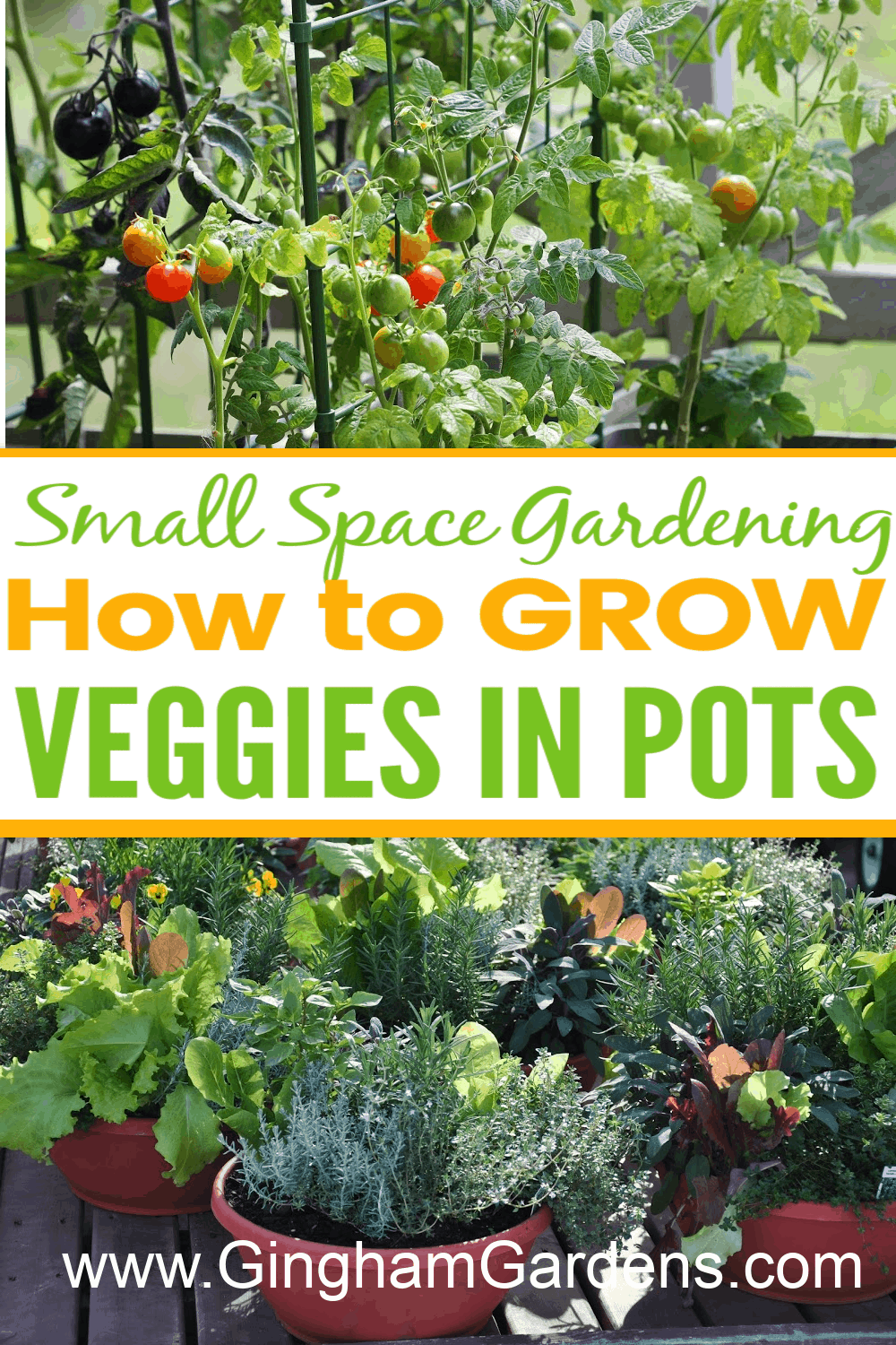 Images of Veggies growing in pots with text overlay How to Grow Veggies in Pots