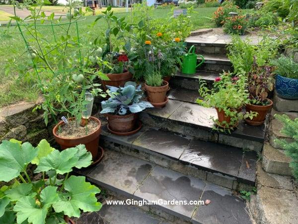 Image of Vegetables in Pots