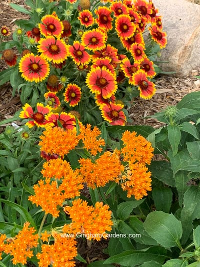 Blanket Flower and Butterfly Weed