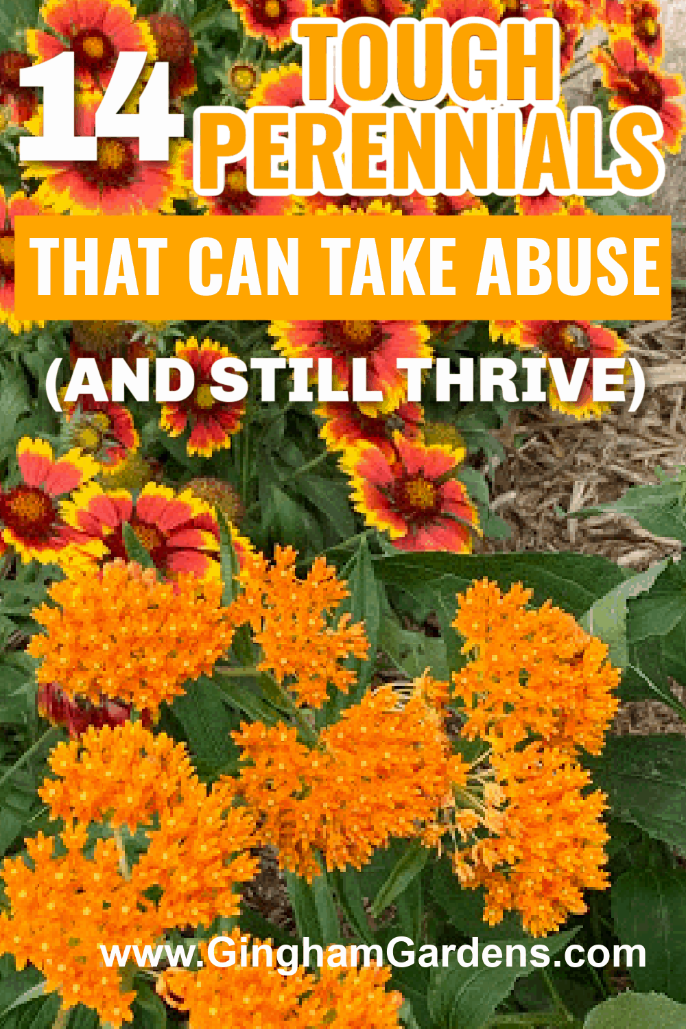 Image of Perennial Flowers with text overlay - 14 Tough Perennials that can take abuse and still thrive