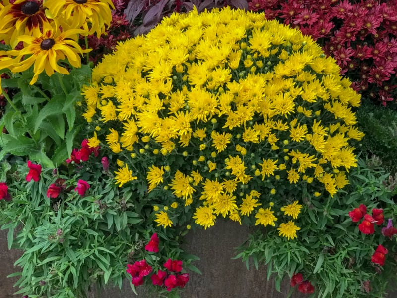 Image of fall flowers